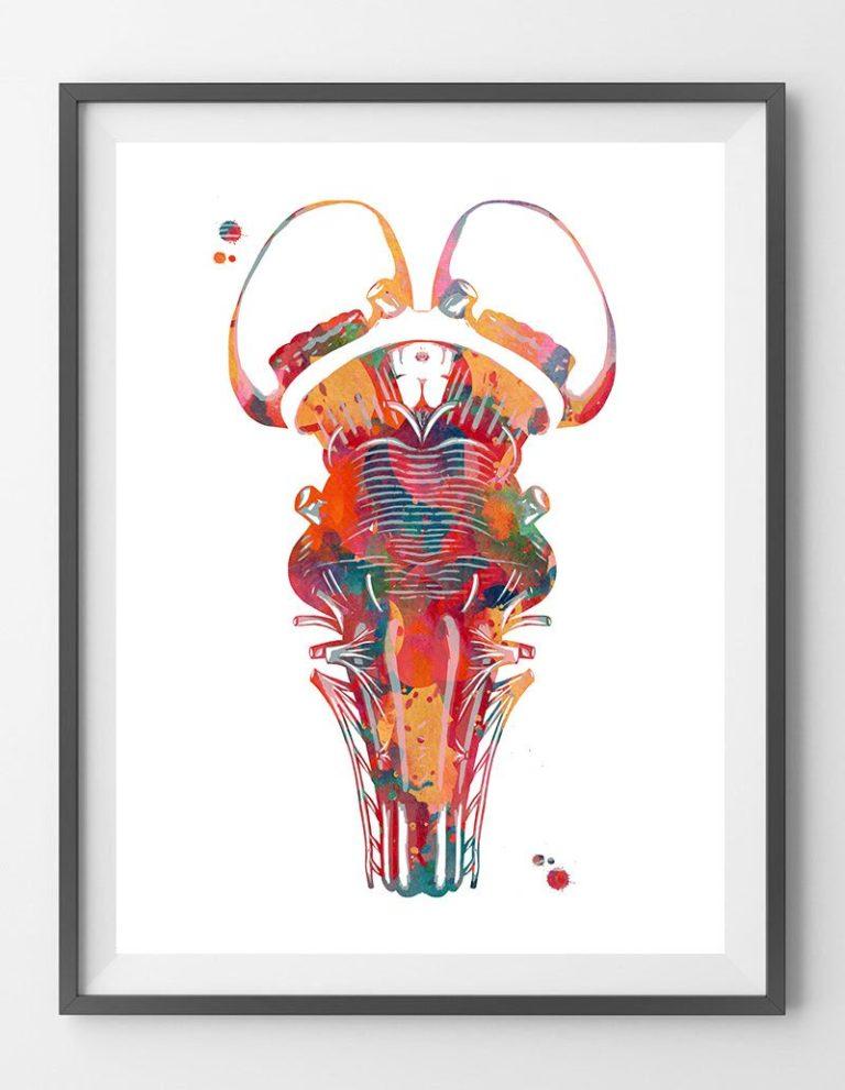 Brain stem watercolor print thalamus poster optic chiasm ...